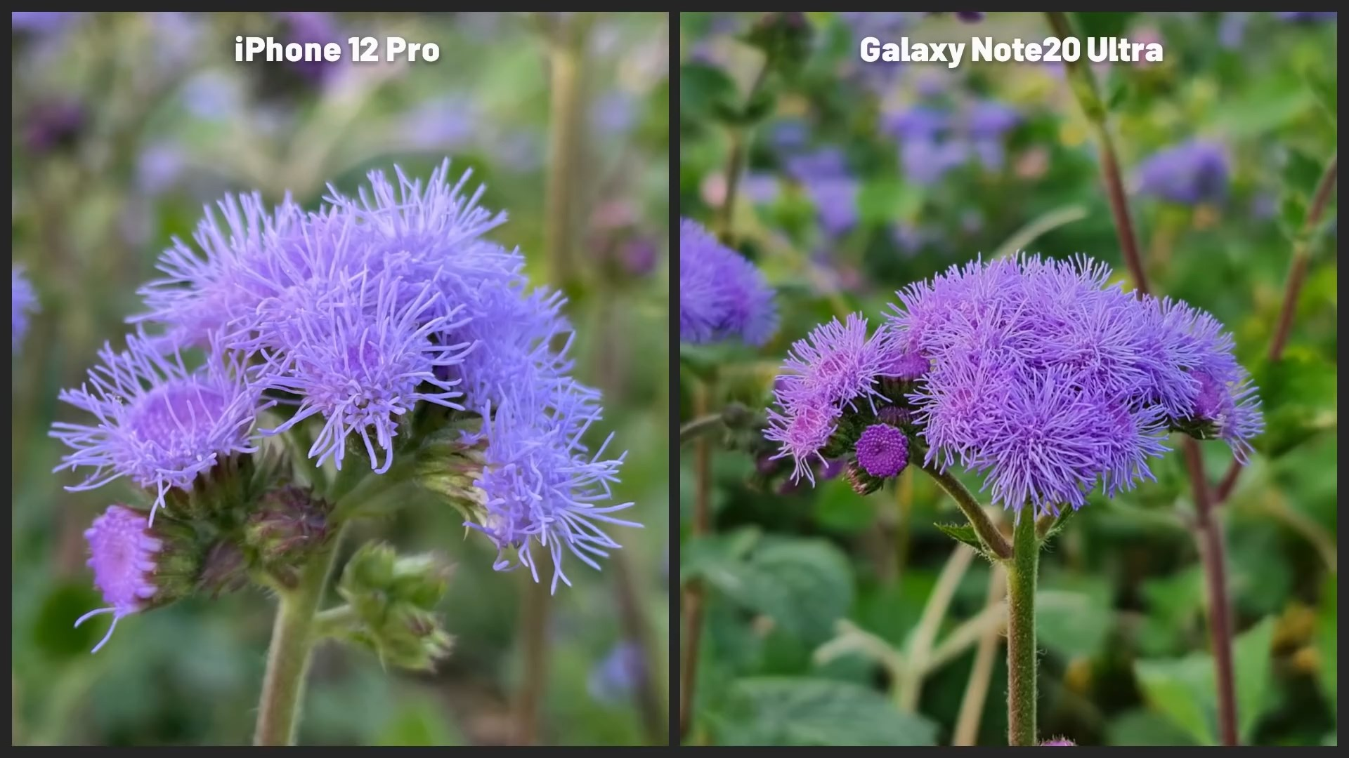مقایسه دوربین  iPhone 12 Pro Vs Note 20 Ultra